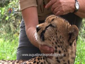 Ria met cheetah