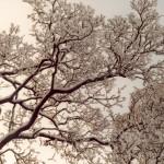 009. winter