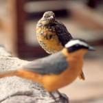 035. bird of a kind