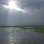 008. Lake Naivasha