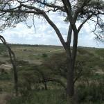 001. uitzicht vanaf kamp Ndutu