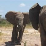001. spelen in Kenia