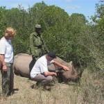 003. Morani - black Rhino