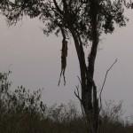 008. prooi luipaard