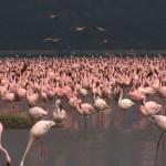 018. Lake Nakuru