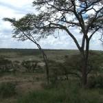 008. grens Serengeti / Ngorongoro