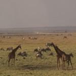 023. Amboseli