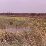 002. Camargue in bloom
