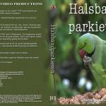 Rose-ringed parakeet  (Halsbandparkieten)