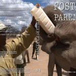 Foster Parents - weesolifanten in Kenia