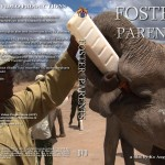 Foster Parents - orphan elephants in Kenya