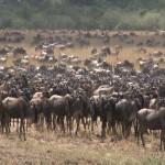 011. verzamelen bij Mara rivier