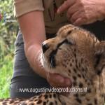 002. Ria caresses cheetah