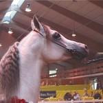 025. Alba - eigenaar Halsdon Arabians
