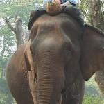 004. werkolifanten Thailand
