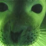 044. under water