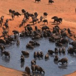 001. Buffalo in waterhole