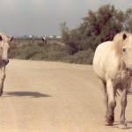 012. deux chevaux