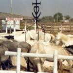 016. promenade a cheval