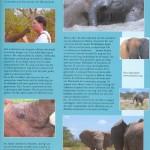Hoeksche Waard Magazine (2) - jan 2011 - oplage: 40.000