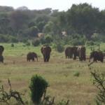 001. wild herd