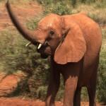 002. orphan elephant