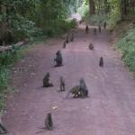 011. Baboon Road