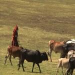 028. Masai herder