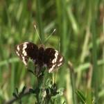 032. Masai vlinder