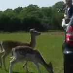 026. Bambi