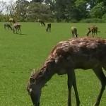 069. deer park