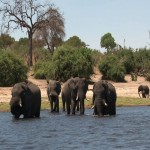 014. oversteek Chobe rivier