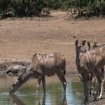 023. pools in Chobe drogen op