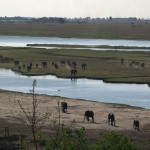 024. from 50.000 to 120.000 elephants