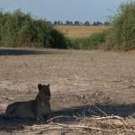 027. langs de Chobe rivier