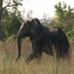 037. bullying elephant