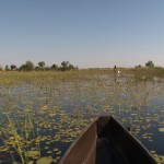 045. Mokoro's traverse the Okavango