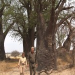 101. Baines baobabs