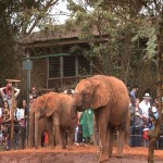 003. nursery in Nairobi
