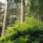 022. Grant Cedar Natural trail