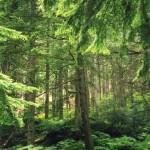 023. Grant Cedar Natural trail