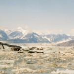 026. struck icebergs - not again...