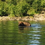 032. Grizzlies eten vis EN vissers