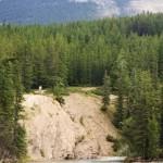 033. Ko left behind in bear territory