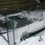 007. pond frozen