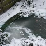 008. deep frozen fish sticks?