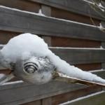 015. snow bird