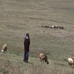 011. Maasai goat keeper