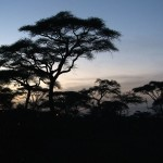 059. Africa is special