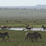 065. green plains of Ndutu